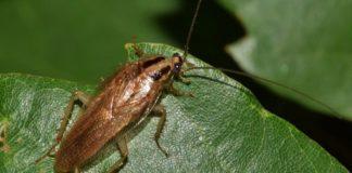 cucaracha y ventas